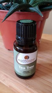 Arbol de té (Melaleuca alternifolia)