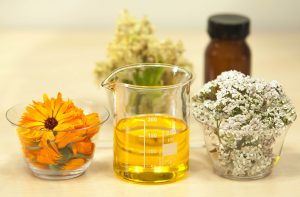 Maceración de plantas en aceite